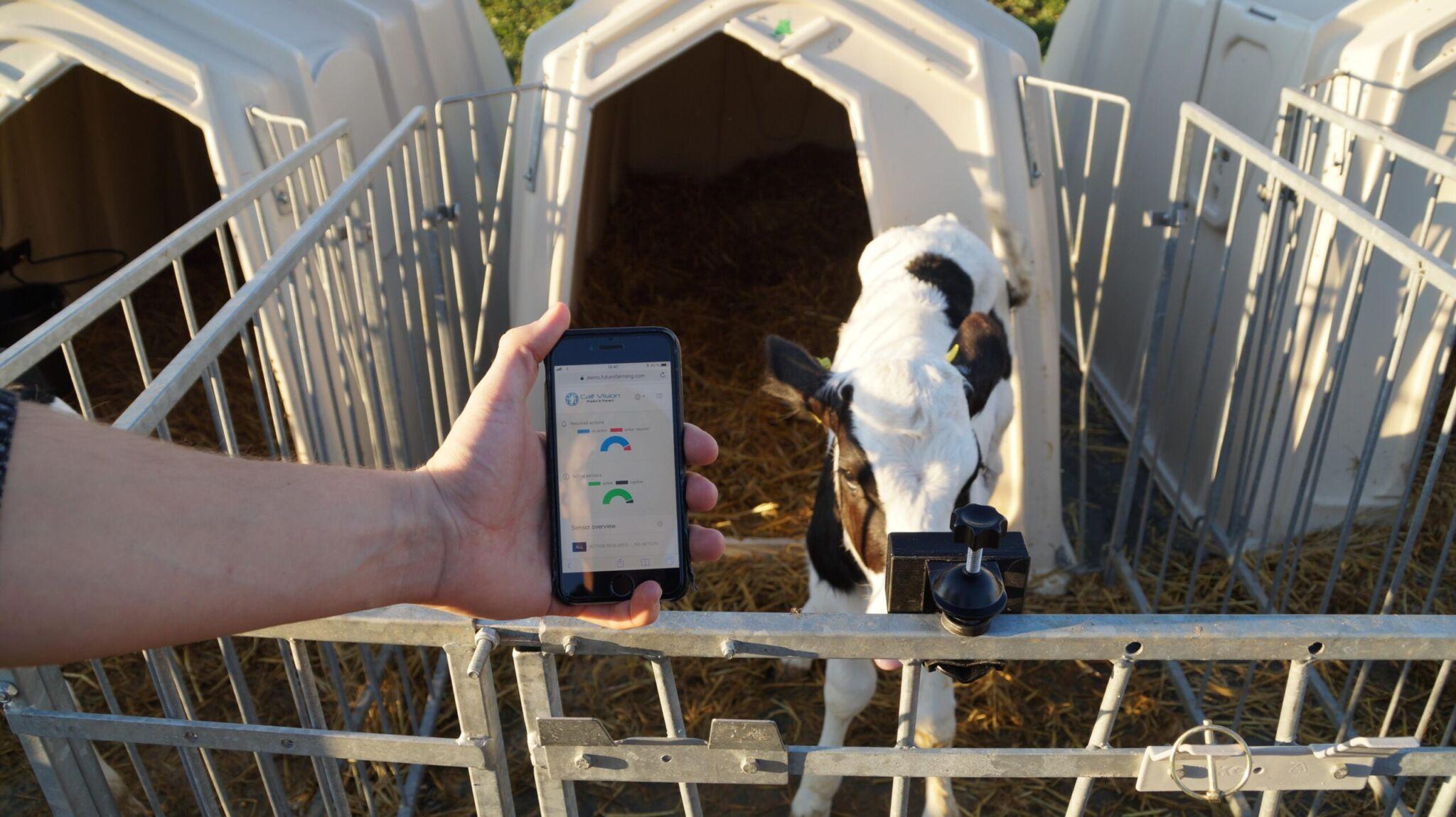 Calf Monitoring System von Futuro Farming |copyright: Werkbild