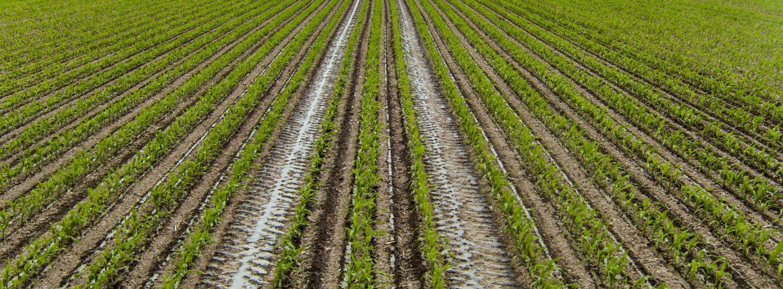 Konjunkturbarometer Agrar: Landwirte planen Investitionen